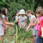 Camp kids in herb garden